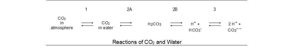 Reactions of CO2 and Water